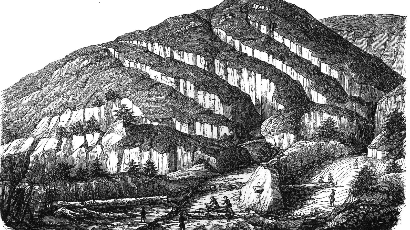Már több mint 200 éve csodájára járnak - a megkövesedett ősfa története