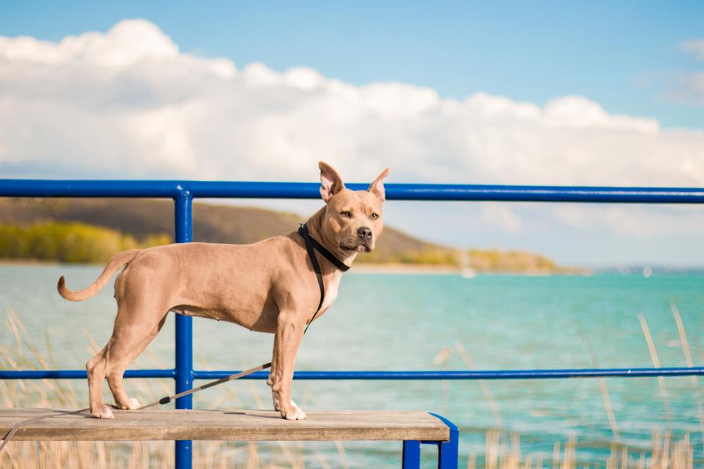 Kedvenc kutyastrandjaink a hazai tavak partjain