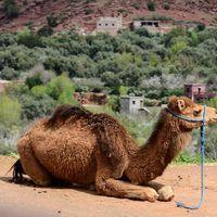 Így autózz Marokkóban!
