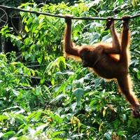 A legegyszerűbben utazható délkelet-ázsiai országok, 3. rész: Malajzia
