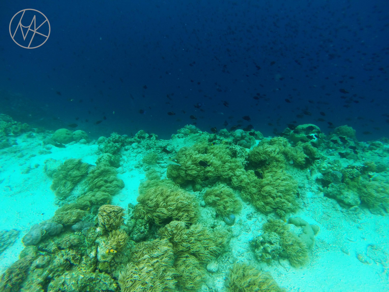 maluku_ambon_tiga_sznorkeling.JPG