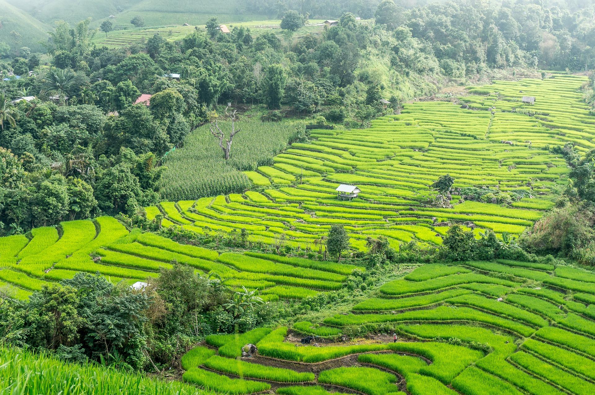 rice-terraces-2224264_1920.jpg
