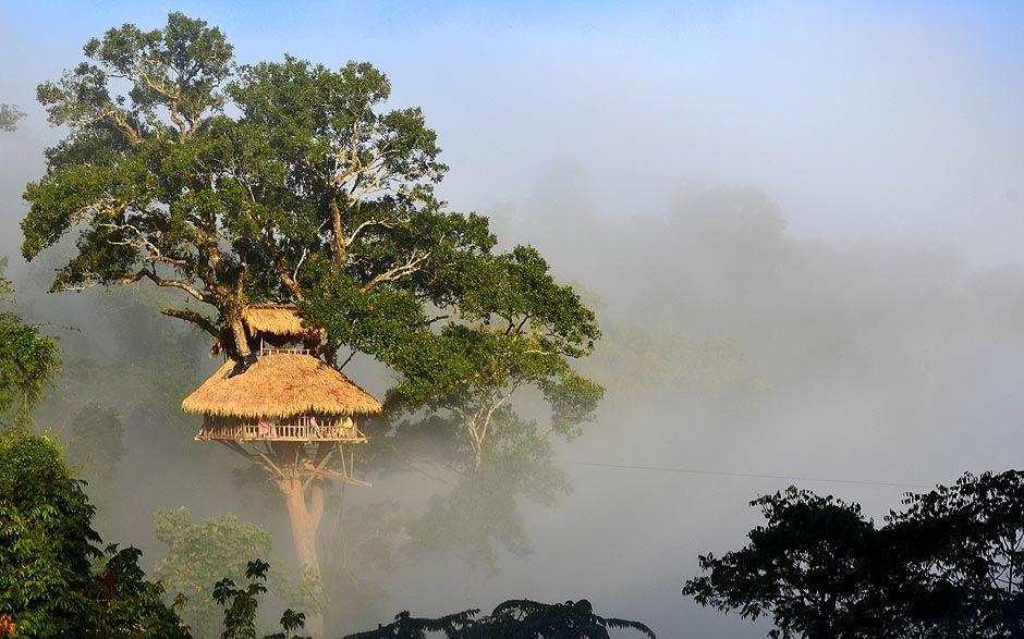 treehouse_6.jpeg