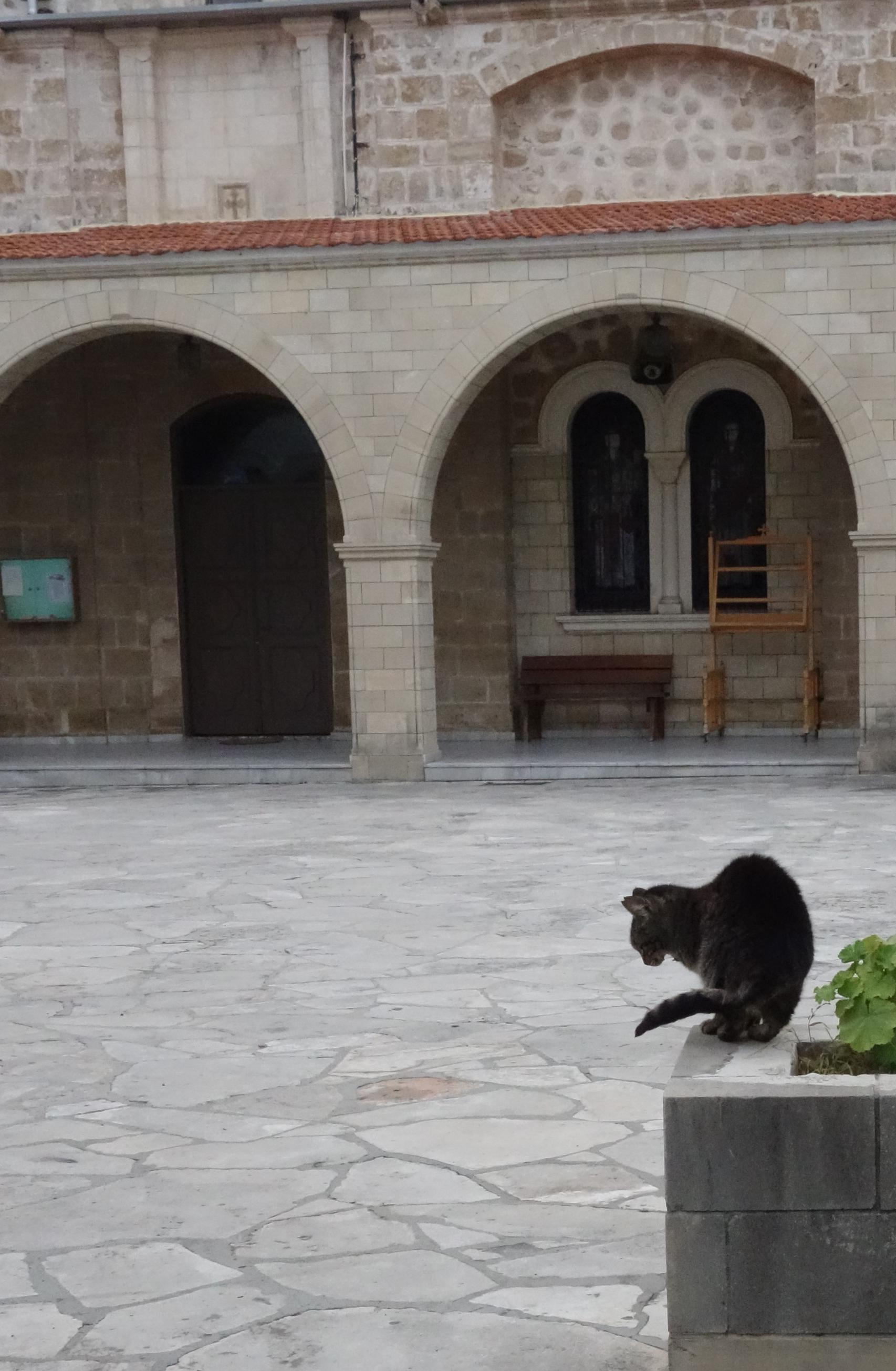 macska_az_agios_theodoros_katedralis_elott.jpg