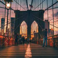 New York, az élet dzsungele