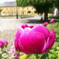Pünkösd Egerben és a Gyógyvizek völgyében
