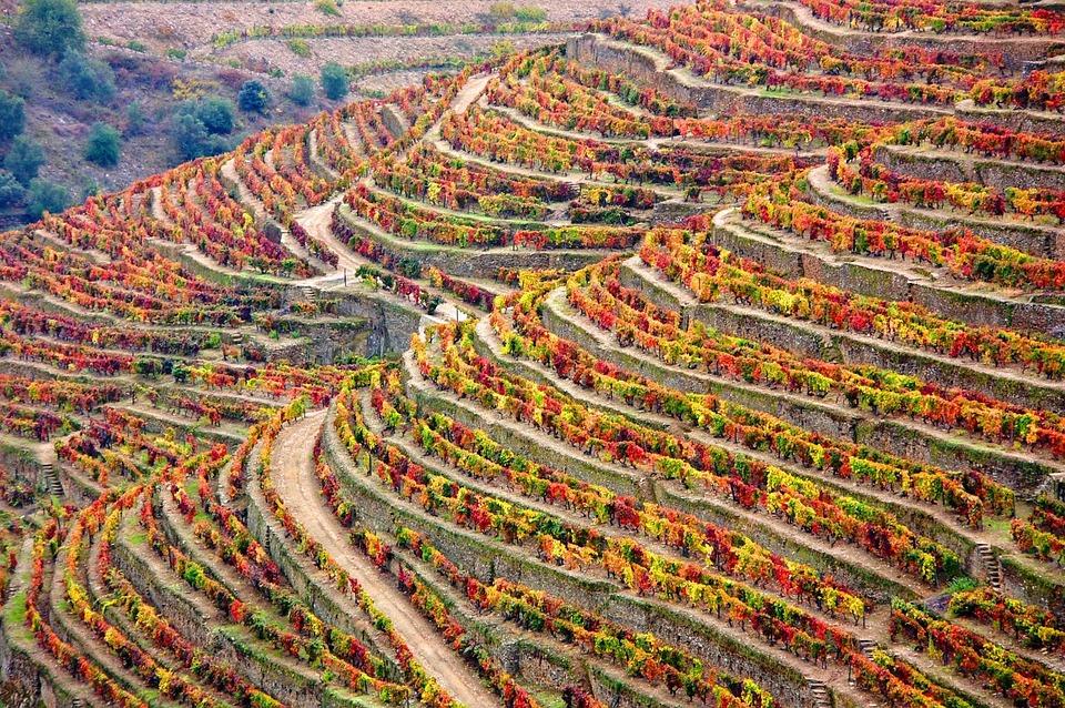 winery-1357947_960_720.jpg