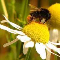 Feleslegesen pusztítják a beporzó rovarokat