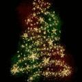 Bérelj fenyőfát, hogy ne kelljen karácsonyra egyetlen fának sem meghalnia!