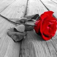 A rózsa, mint Krisztus kiomló vére