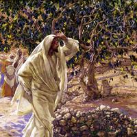 A Lélek gyümölcsei.../Az Ige világossága.../ Küzdés.../Segítségnyújtás.../Szabadság...