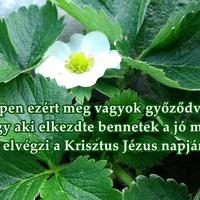 """A házasság szövetsége-Add Istennek időd """"első zsengéjét""""!-Az együtt érző szív áldásai-Hagyd abba a panaszkodást!-Isten megbocsát és helyreállít-Kevesebb erőlködés, több bizalom!-Magasabb szintű adakozás-Ne akard,hogy minden körülötted forogjon!-Szere"""