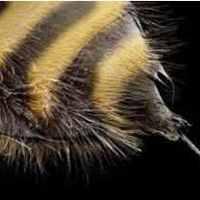 Kutatás, fejlesztés, áttörés - A méhek mérge megöli a HIV vírust plusz alkalmazott nanotechnológia
