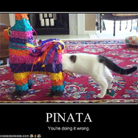 Pinata, burrito, taco: kóstolj bele Mejicóba! - Nyit a Mucho Burrito hamarosan