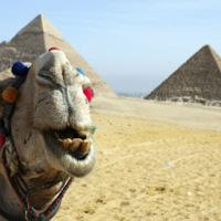 Elstartol a Cellum innovációja Egyiptomban