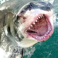 Intel termékfejlesztés - Kell neki a piac: cápatámadás az ARM ellen