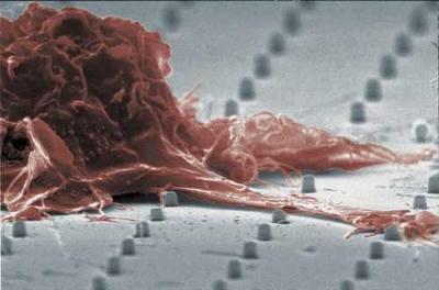 neuron-chip.jpg