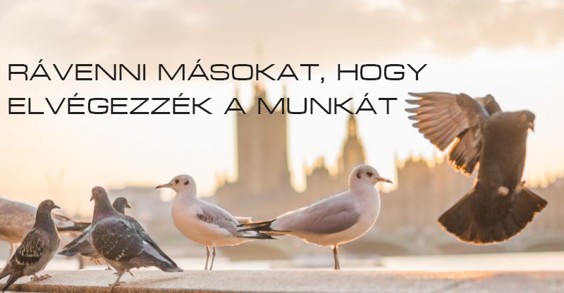ravenni_masokat.png