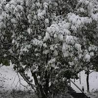 Tél a Hegyvidéken