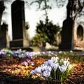 Élettől nyüzsgő temetők