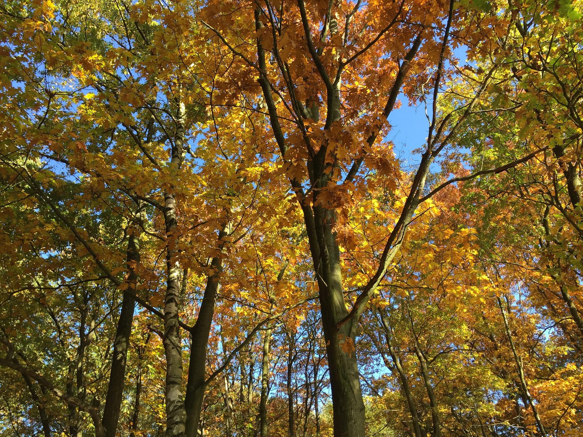autumn-1747722_1920.jpg