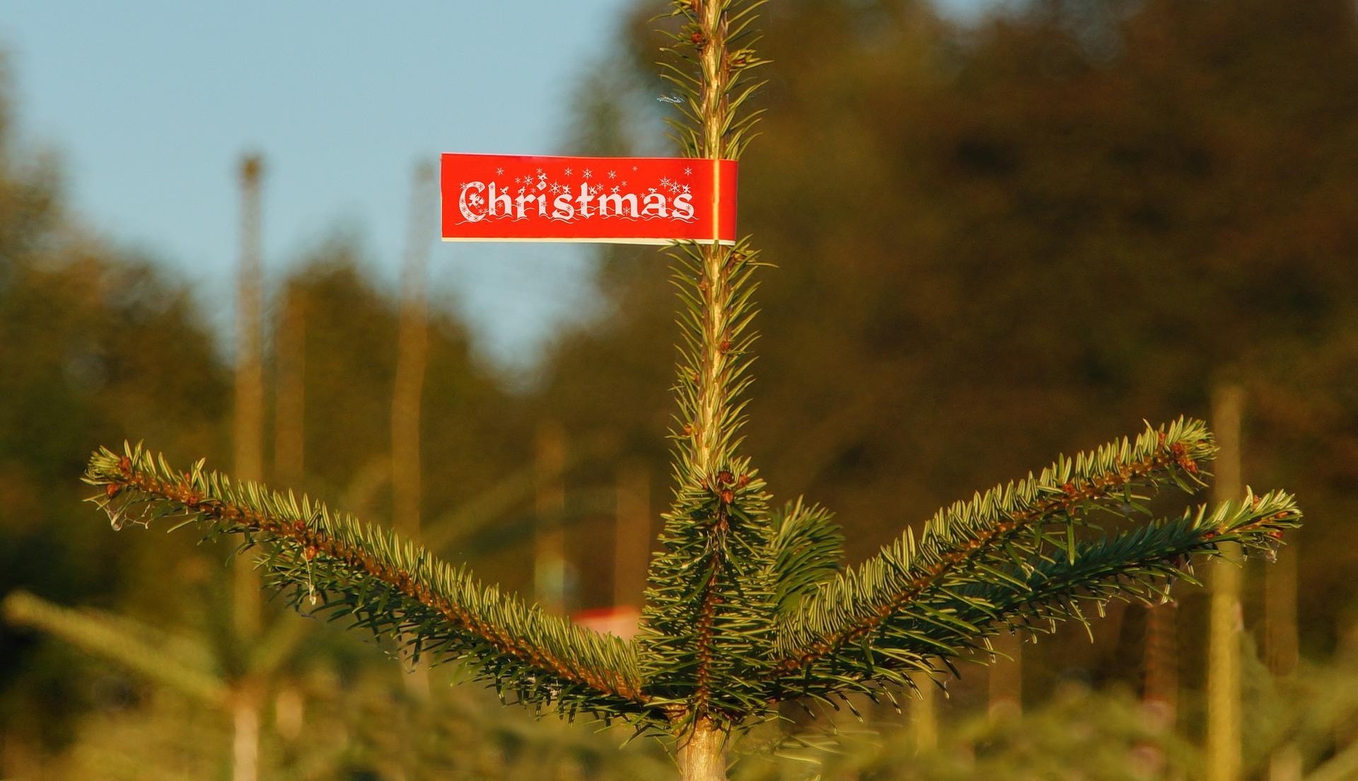 christmas-991807_1920.jpg