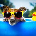 Mutatjuk a legjobb belföldi kutyabarát strandokat