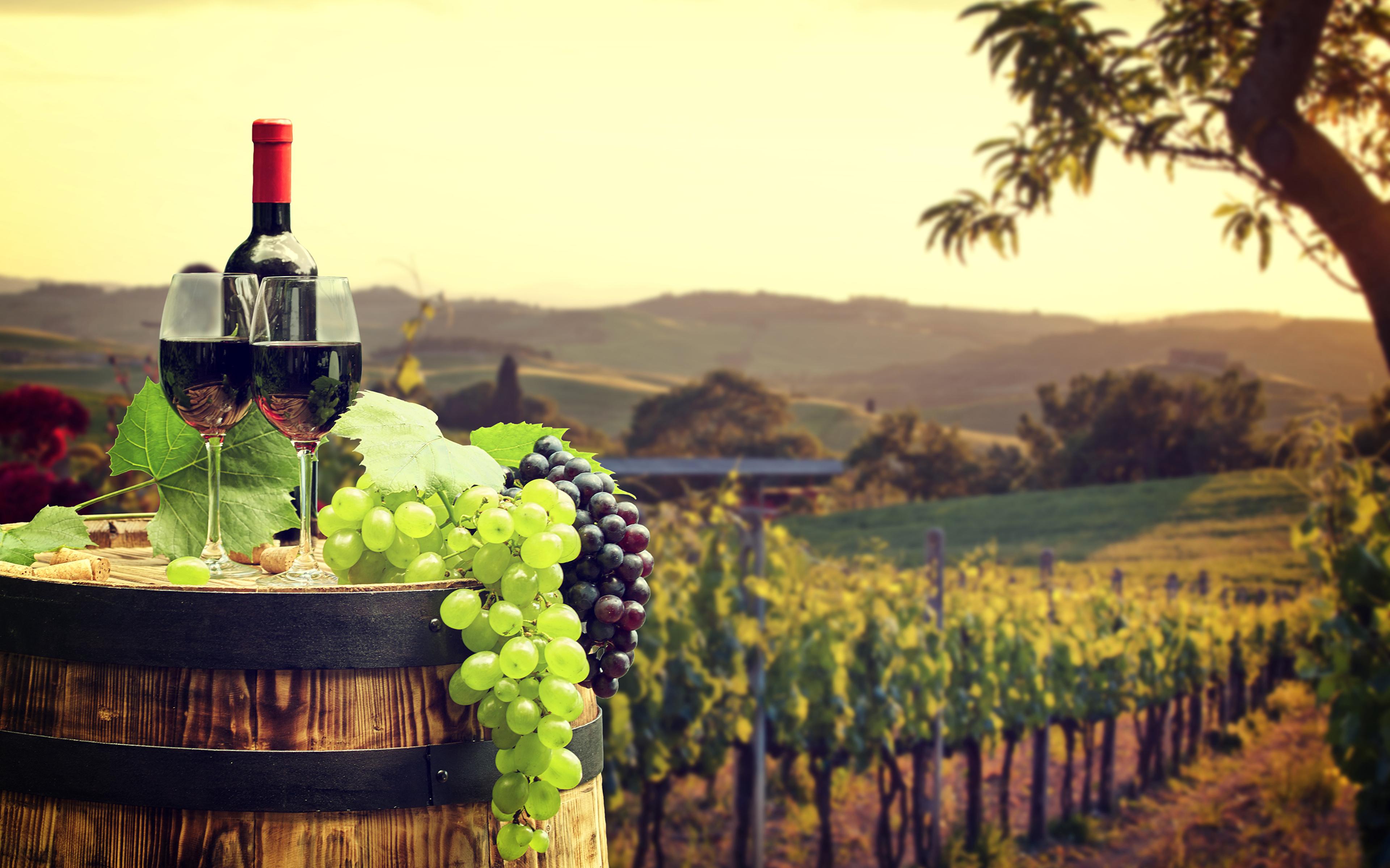 nyito-wine_grapes_barrel_497687_3840x2400.jpg