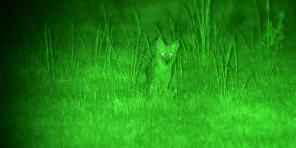 nightvision-varmint-hunting-1.jpg