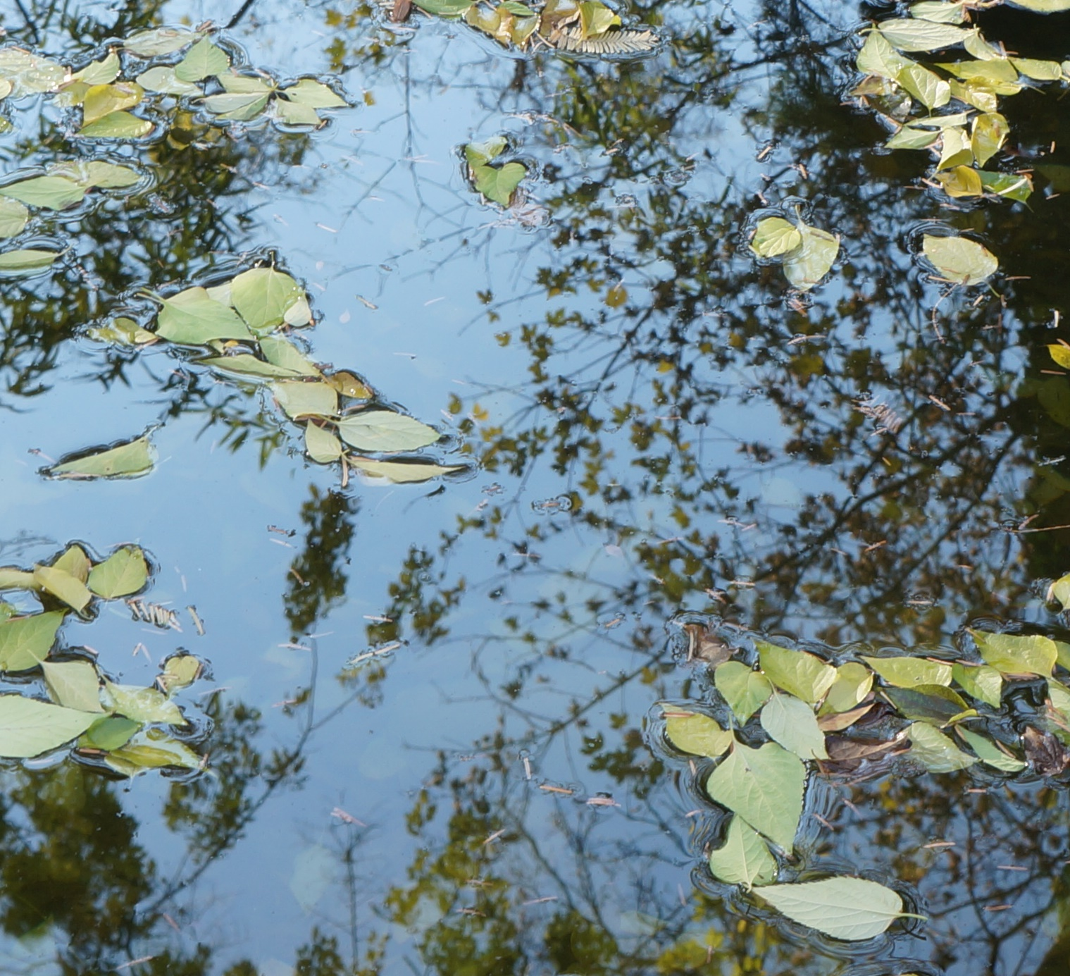 ázsiai kert, tó