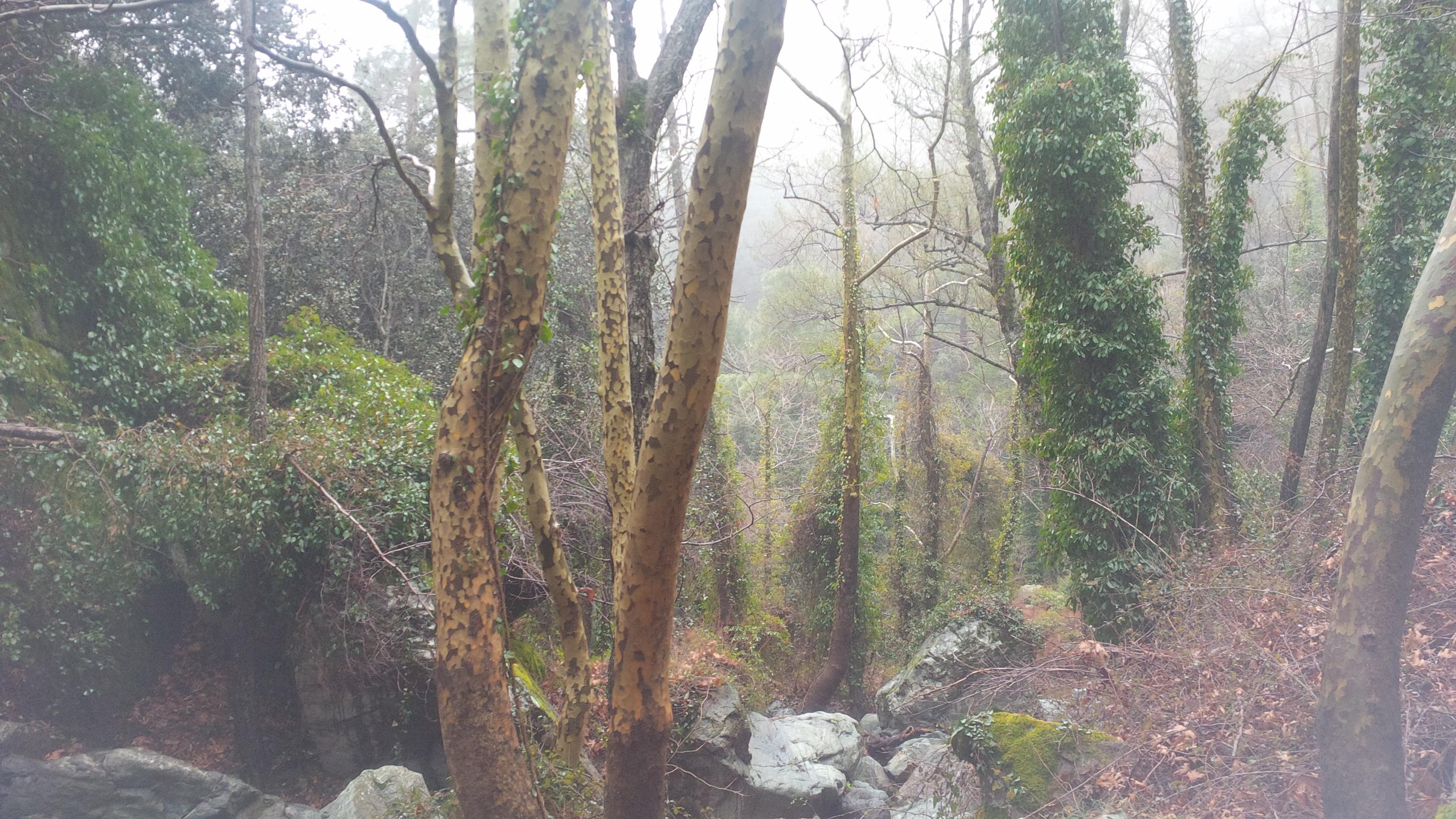 Troódos-hegység, erdő