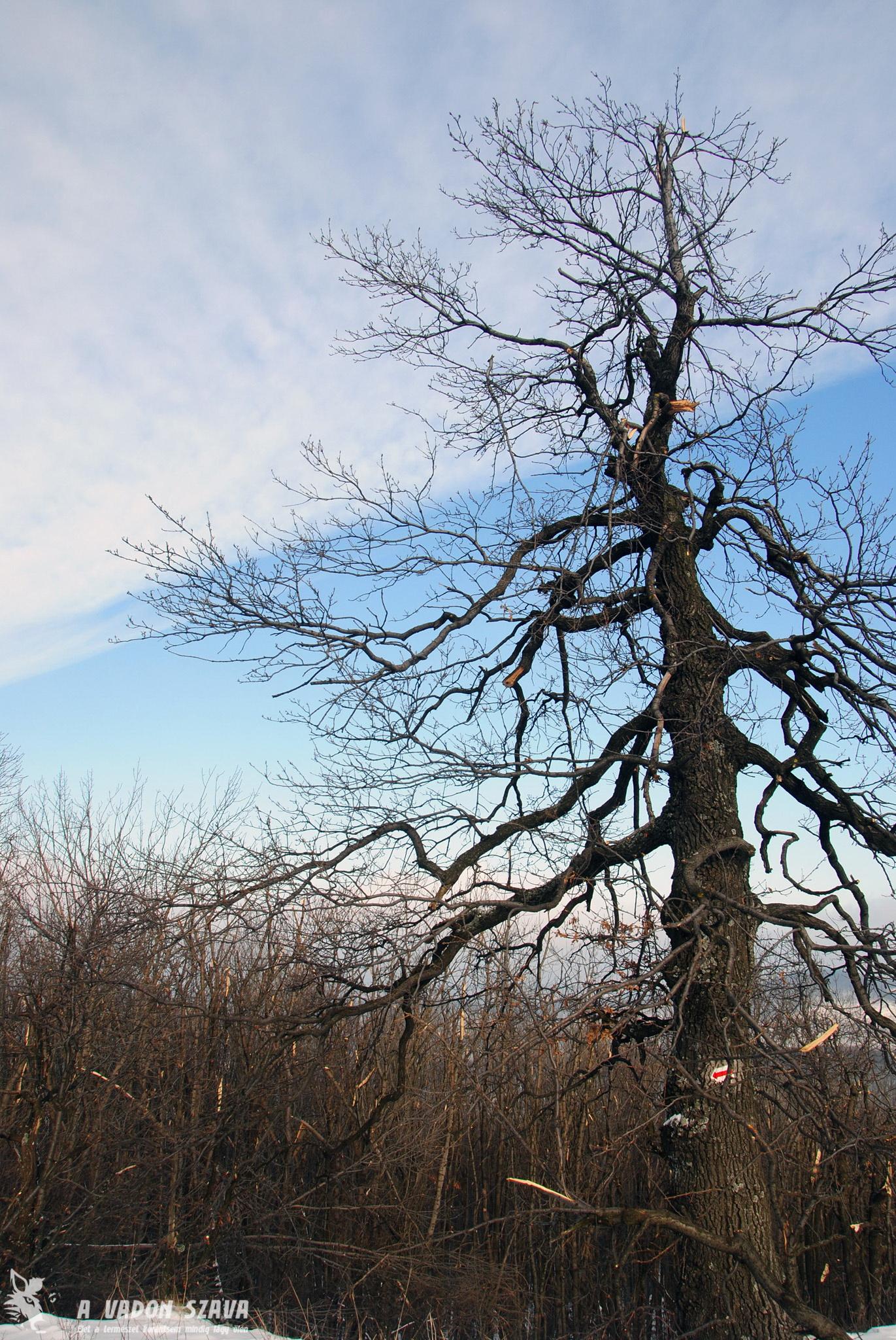 Rengeteg gally tört le a fáról.
