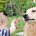 Felelősséggel a kutyatámadások ellen...
