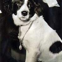 Egy kutya találta meg az ellopott VB kupát