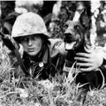 A K9 története, avagy kutyák a II. Világháborúban