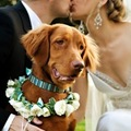 Esküvő kutyával?