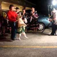 Dog Dancing, vagy vásári bohóckodás?
