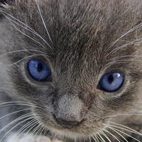 Macskák és nevek...