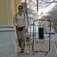 Már dolgozó vakvezető kutyáink