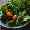 Hogyan szerettessük meg gyermekeinkkel a zöldségeket