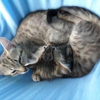 Alvóhely kiscicáknak