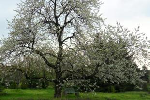 A természetesen művelt kert - gondolatok a FÖLD napján