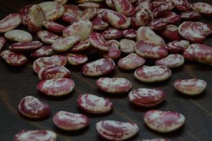 Fejtett bab saláta