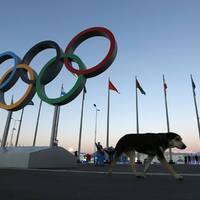 Megtámadták az olimpiánkat!