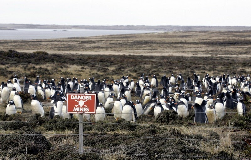 idokapszula_nb_i_1981_82_mnk_donto_falkland_pingvinek.jpg