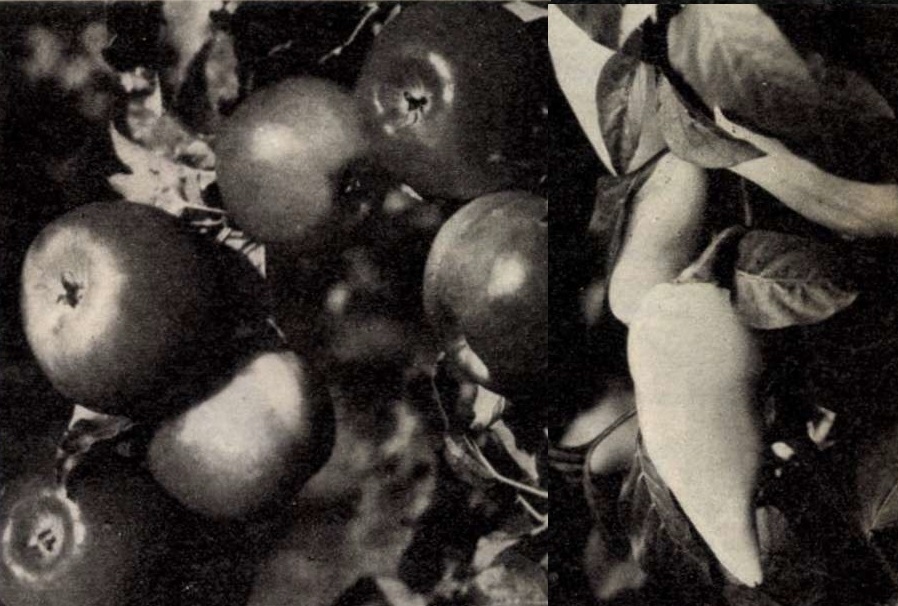 idokapszula_nb_i_1983_84_22_fordulo_magyar_szovjet_gazdasagi_kapcsolatok_6.jpg