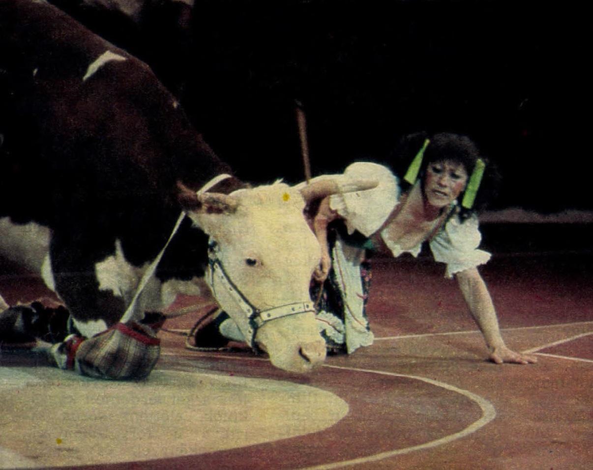 idokapszula_nb_i_1983_84_27_fordulo_cirkusz_4.jpg