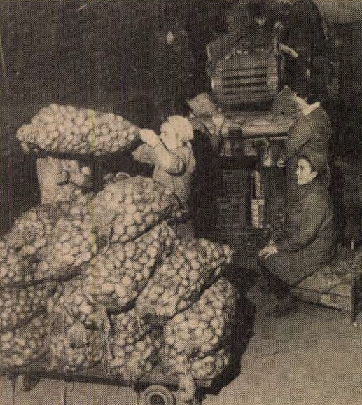 idokapszula_nb_i_1983_84_5_fordulo_krumplitarolas.jpg