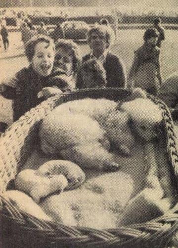 idokapszula_nb_i_1983_84_8_fordulo_kutyakiallitas.jpg