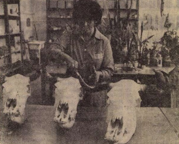 idokapszula_nb_i_1983_84_belgium_magyarorszag_tanert_vallalat.jpg